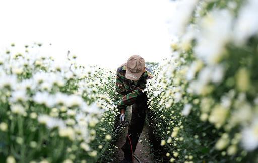 florist: người trồng hoa