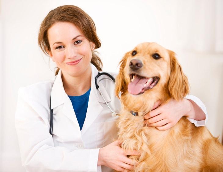 Từ vựng về chuyên ngành thú y