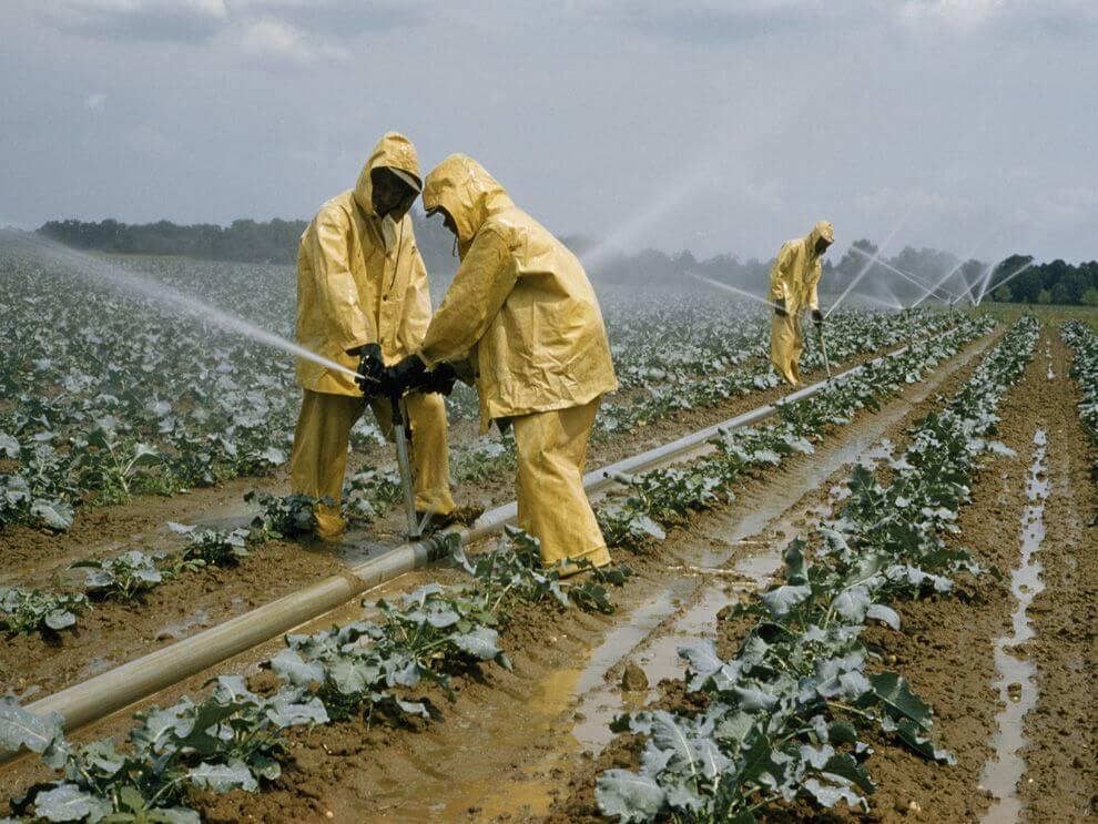 Thuật ngữ tiếng Anh chuyên ngành Nông nghiệp