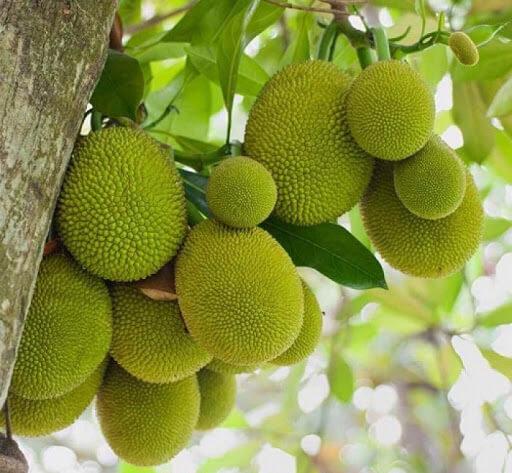 Các loại hoa quả có hình dáng vỏ ngoài xù xì bằng tiếng Anh
