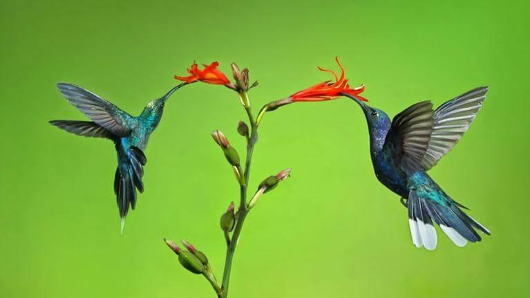 Từ vựng tiếng Anh về động vật – các loài chim